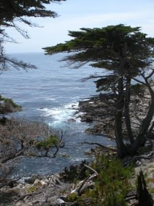 The Monterey Coast